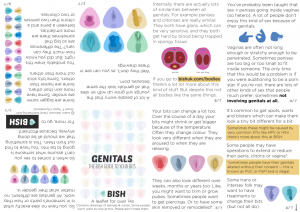 genitals leaflet preview